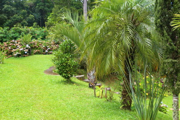 Beautiful outdoor tropical garden with green grass, trees, palm trees. Rural area near Sao Paulo, Brazilr Wall mural