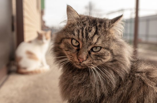 Portrait of a cat on a farm