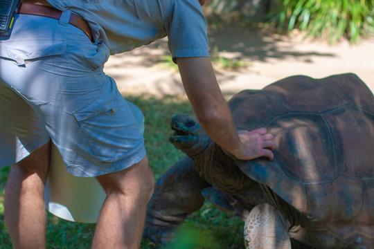 Zoo keeper pats a giant turtle. Australia zoo, Queensland.
