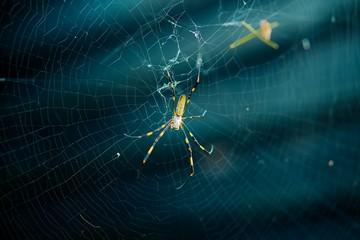 女郎蜘蛛と蜘蛛の巣