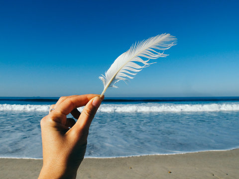 Cropped Hand Holding White Feather At Beach Against Blue Sky