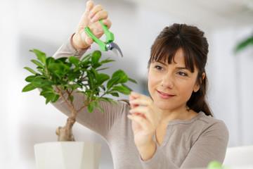 Keuken foto achterwand Bonsai oman trimming an indoors bonsai