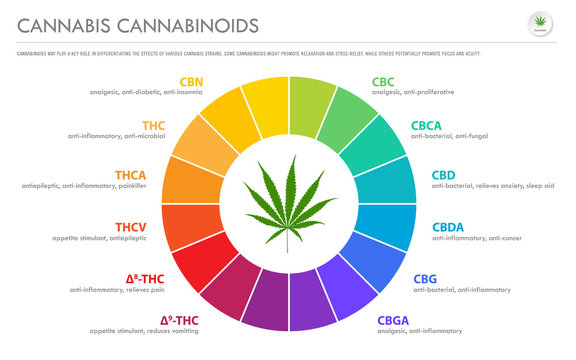 Cannabis Cannabinoids horizontal business infographic illustration about cannabis as herbal alternative medicine and chemical therapy, healthcare and medical science vector.