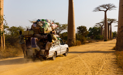 Overloaded car with people hanging on driving through Alley of the Baobabs, near Morondava, Madagascar