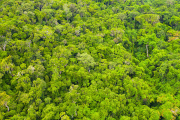 Aerial view onto the Primary Rainforest in the Masoala National Park, Madagascar