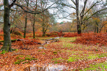 A dull day in woodland