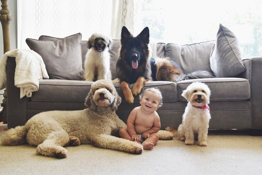 Cute Baby Sitting By Dogs At Home