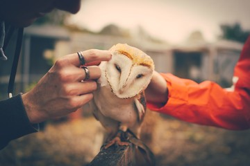 Cropped Image Of Hands Touching Owl