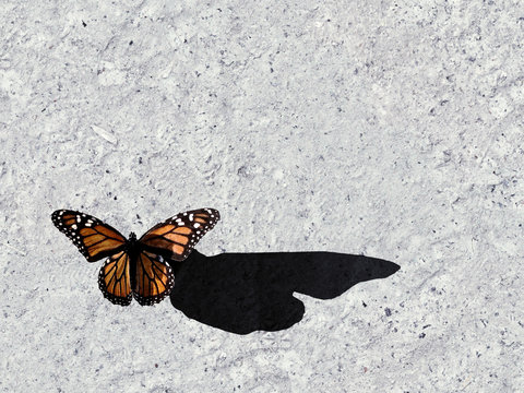 Butterfly on Concrete