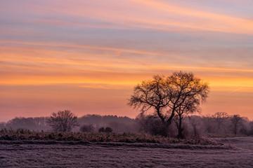 golden sky morning sunrise landscape field frost trees fog