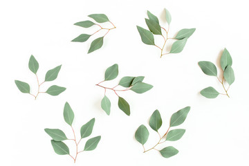 Wall Mural - Green branch, leaves eucalyptus populus isolated on white background. Flat lay, top view