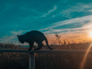 Silhouette Cat On Railing Against Blue Sky At Sunset