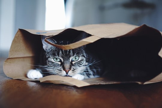 Close-Up Portrait Of Cat In Paper Bag At Home