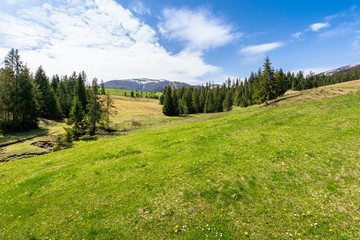Foto op Plexiglas Pistache meadow and forest in mountains on a sunny day. snow capped ridge in the distance. wonderful springtime weather with clouds on the sky. traditional countryside landscape of carpathians