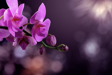 Spoed Fotobehang Orchidee orchid flower on a blurred purple background. valentine greeting card. love and passion concept. beautiful romantic floral composition.