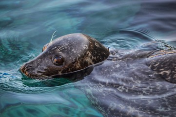 Close-Up Of Sea Lion Swimming In Water
