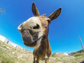 Photo of the funny dankey in desert of Morocco