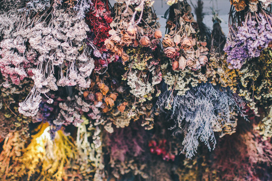 High Angle View Of Dry Colorful Flowers