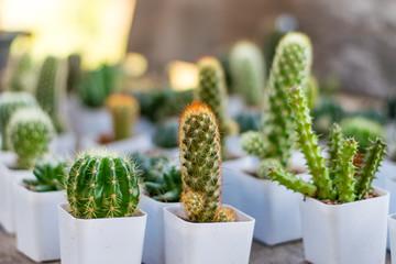 Photo sur Aluminium Cactus Small cactus in a white planting pot
