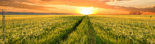 Fototapete Bright sunset sky with cumulus over a grain field. Rural summer landscape. Beauty nature, agriculture and seasonal harvest time. Panoramic banner.