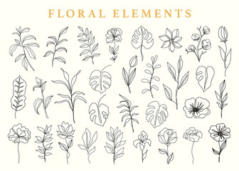 Floral elements set, botanical drawings