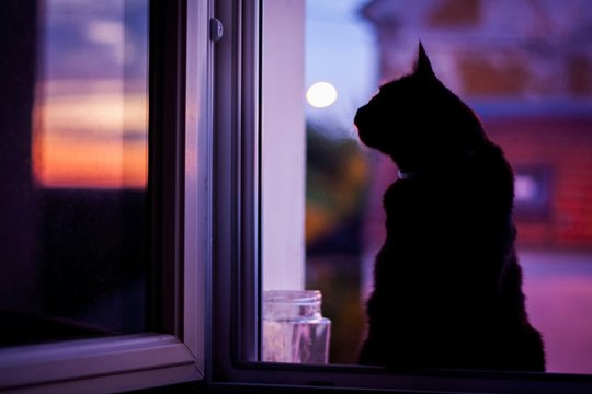 Silhouette Cat On Window Sill At Night