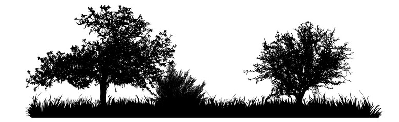 Vector silhouette of meadow with tree on white background. Symbol of nature with grass. Fototapete