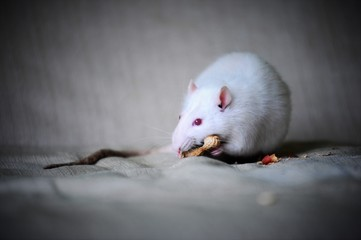 Close-Up Of White Mouse On Bed