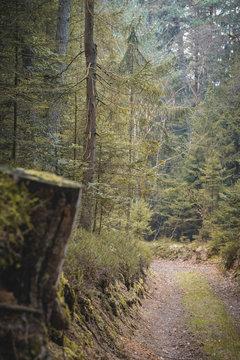 Natur und Wald Fotos