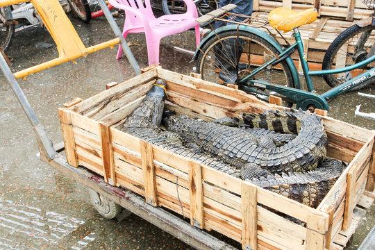 GUANGZHOU, CHINA - CIRCA MARCH 2016: Chinese typical fish and crocodile market