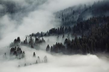 Poster Morning with fog Foggy mountain landscape. Carpathian mountains, Ukraine Travel