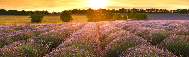 Poster Lavande Lavender field at sunset in Provence, France