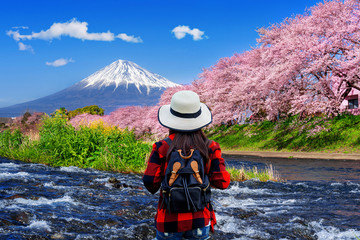 Wall Mural - Tourist looking at cherry blossoms and fuji mountains in Shizuoka, Japan.