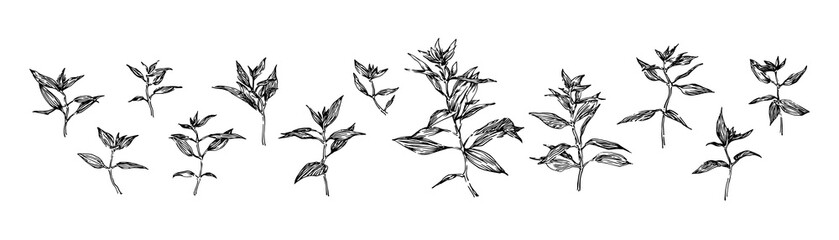 Set of hand drawn plants with leaves. Stylized sketch decorative wild herbs vector illustration. Black isolated image on white background