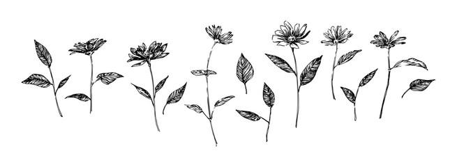 Set of hand drawn graphic flowers. Stylized sketch decorative botanical vector illustration. Black isolated image on white background