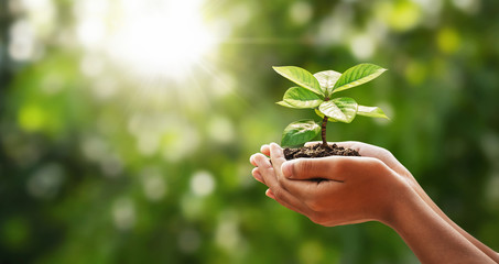 Wall Mural - hand holding young plant on green nature with sunshine background. concept eco earth day