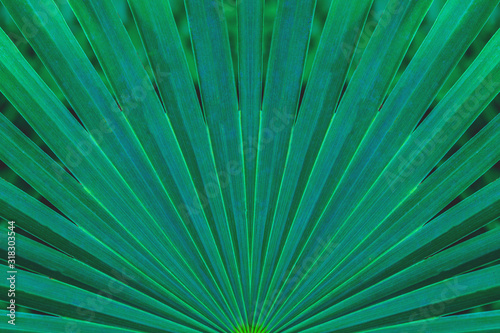 Wall mural tropical palm leaf and shadow, abstract natural green background