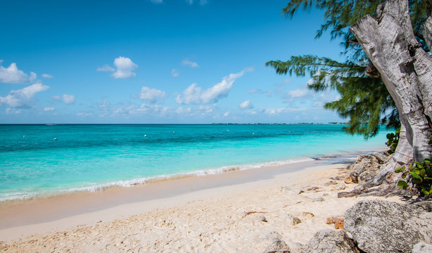 Seven Mile Beach with white sandy beach, turquoise colored sea and old tree along the coastline of the Island, Grand Cayman.