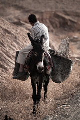 Side View Of Man Sitting On Donkey At Field