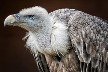 Close-Up Of Vulture Perching Outdoors Fotomurales