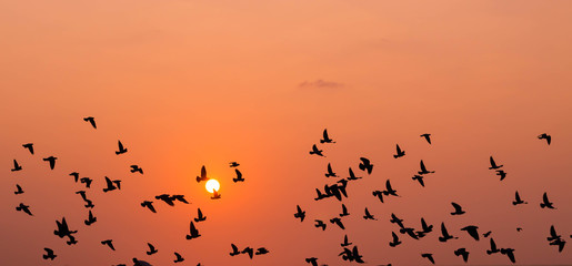 Fototapeta Low Angle View Of Silhouette Birds Flying In Orange Sky
