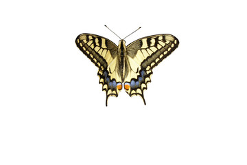 Swallowtail butterfly isolated on white background with clipping path. Top view, closeup