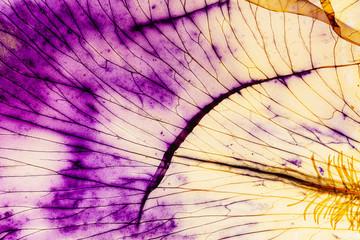 Deurstickers Iris iris petal on the white background