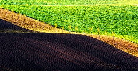 Tuinposter Lime groen Rural spring landscape with colored striped hills. Green and brown waves of the agricultural fields of South Moravia, Czech Republic. Can be used like nature background or texture