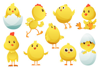Cute cartoon chicken set. Funny yellow chickens in different poses, vector illustration. Collection of cute yellow chicks. Vector illustration of little chickens for children