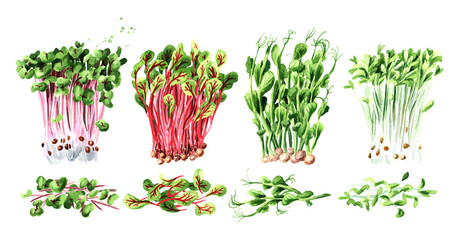 Microgreen spruits set. Vegan and healthy eating concept, Seed Germination. Hand drawn watercolor illustration, isolated on white background