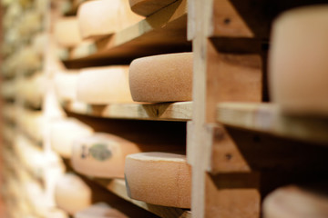 closeup of cheese crusts on traditional wood shelves in cellar