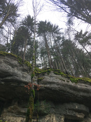 high up trees climbing to cloudy sky from limestone cliff