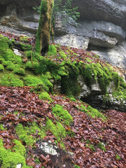 nature power - moss, dead leaves covering tree roots over limestone
