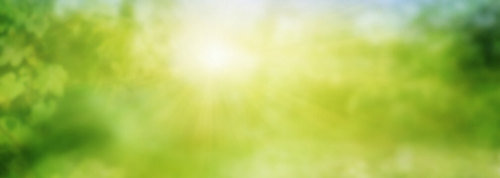 Abstract green sunny spring landscape